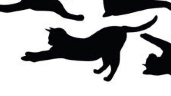 ネコの柄イメージ 2