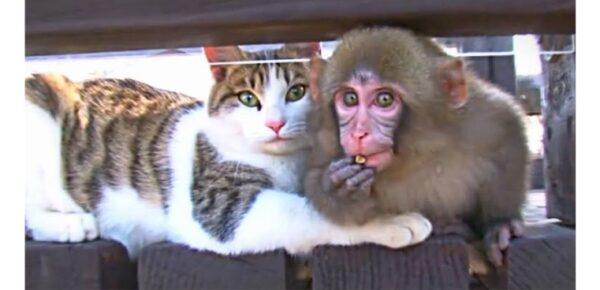 ネコとお猿の結婚指輪をオーダーしたい